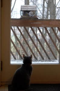 cat watching out window