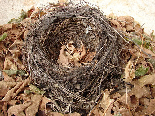 Do I Like My Empty Nest?
