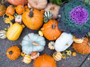 fall-gourds